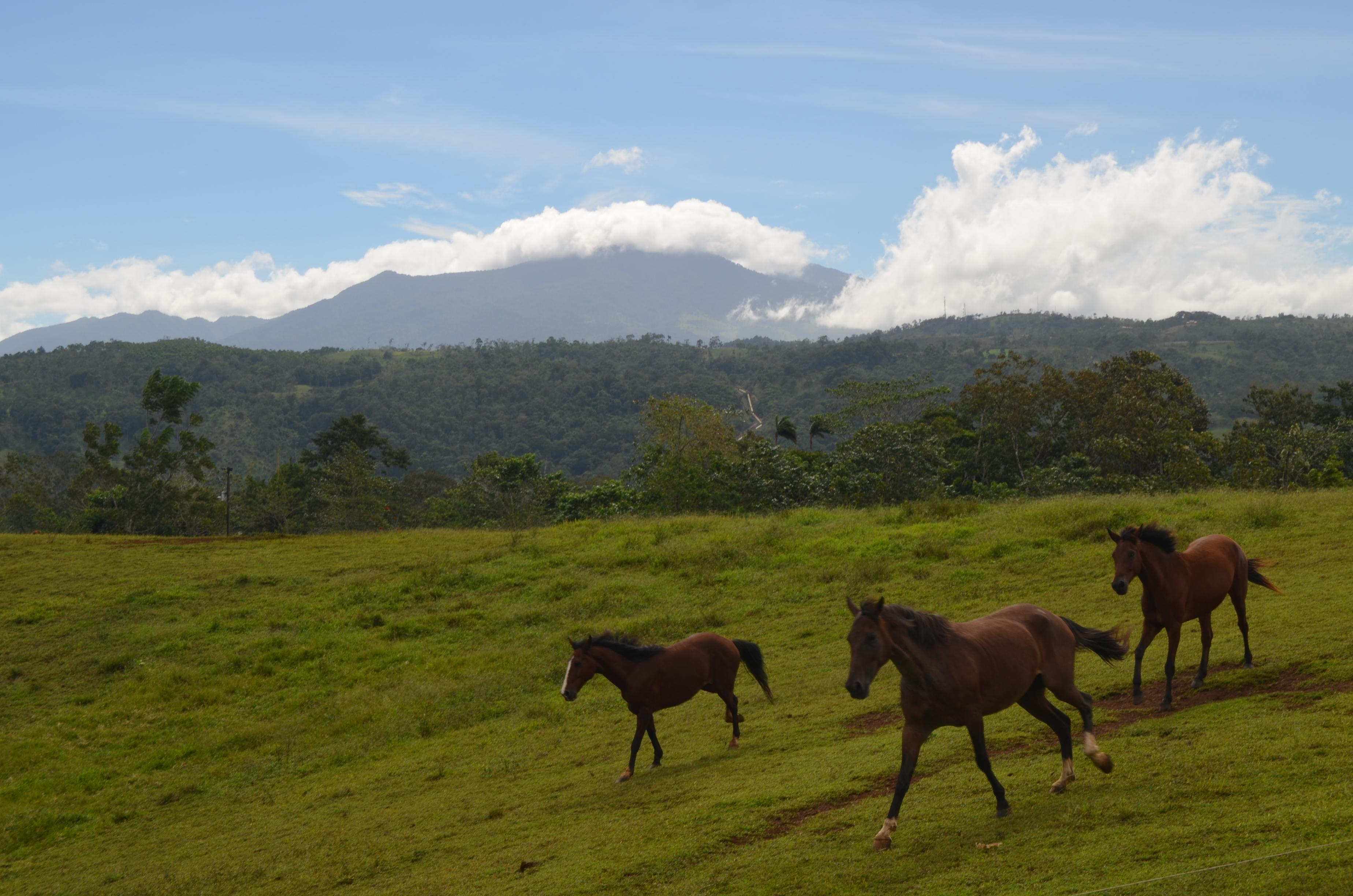 Centaur Costa Rica