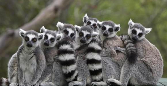 Island of Lemurs: Madagascar 3D