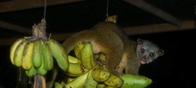 Chilamate Rainforest Retreat