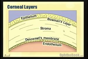 cornea layers
