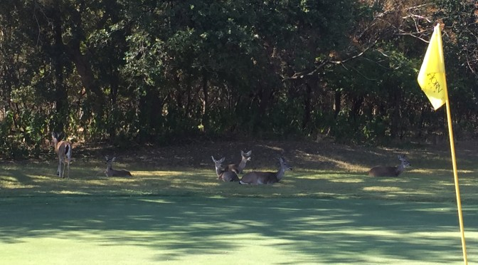 COVD Annual Golf Tournament
