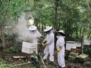 Beekeeping in Haiti