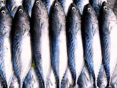 say no to tuna
