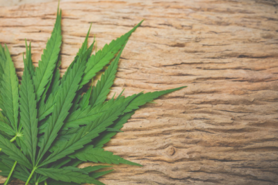 This image shows an image of cannabis leaves used for medical uses.