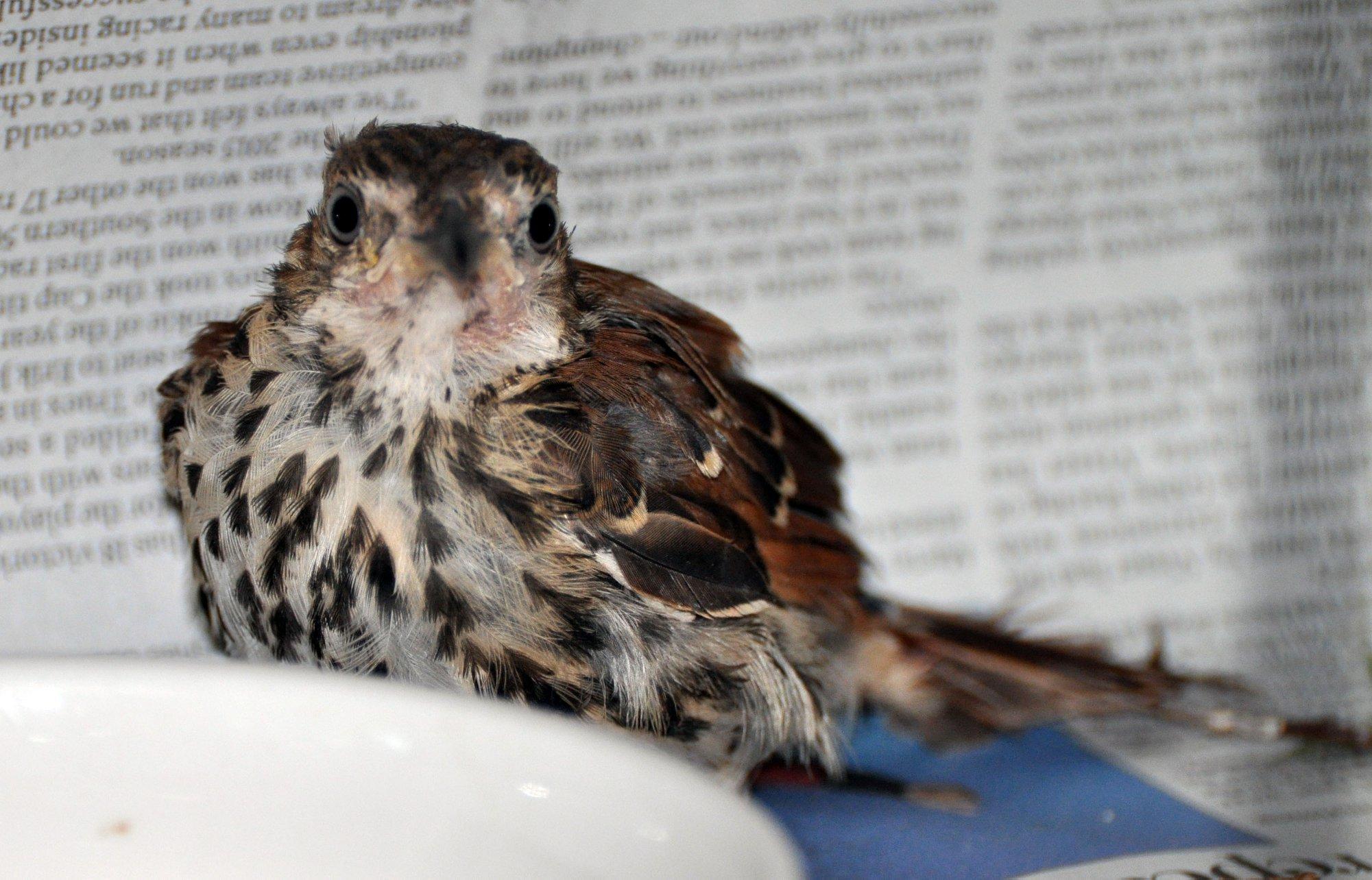 Why Call a Bird Rehabilitator Right Away