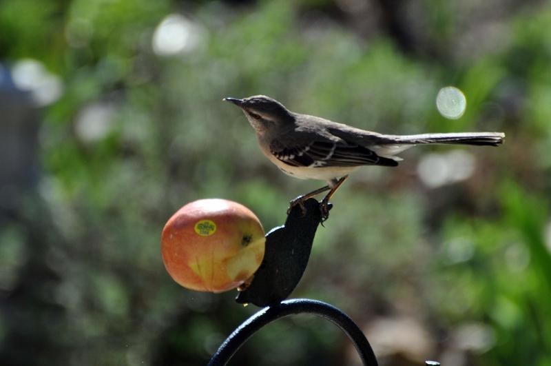 The Curious Birder: Stretch Your Bird Food Budget