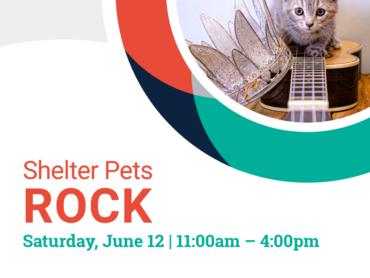 shelter pets rock