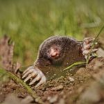The Best Advice To Get Rid Of Pests