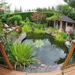 Make the Perfect Water Garden Come to Life