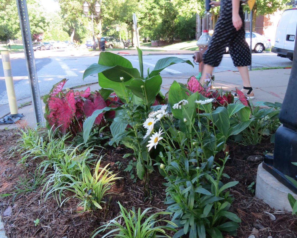 Nicki's Central West End Guide Art & Architecture Urban Gardens  Waterman/Lake Special Business District Traffic Calming Project Tom Brackman Tom Brachman New City School First Unitarian Church CWE Farm Central Reform Congregation