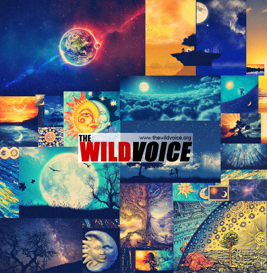 the wild voice day and night