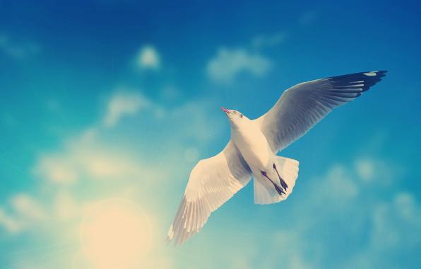 seagull, antichrist, NWO, ISIS, false prophet, Jesus, God, Reverlation