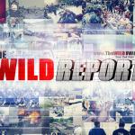 the wild report