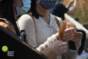 兩名多感官生態導賞團參加者,手上有一束蘆葦種子 Two multisensory eco-tour participants having reed seeds on their hands