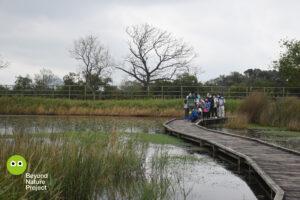 戶外。主要色調:綠、木的顏色、黃。一群參加者在一條橫跨淡水塘的木棧道上。木棧道是微曲的。水塘長著蘆葦和咸水草。樹木在背景的大後方。Outdoor. Major color tone: Green, wooden and yellow. A group of participants are on a  curved boardwalk across the rain-fed pond. Reeds and brackish grass are growing in the pond. Trees are in the far back background.