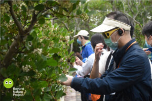戶外。參加者正在觸摸桐花樹樹葉,葉面上有從鹽腺上分泌出來的鹽粒。Outdoor. Participants are touching leaves of black mangrove, feeling the salt on the leaves that secreted from its salt gland.