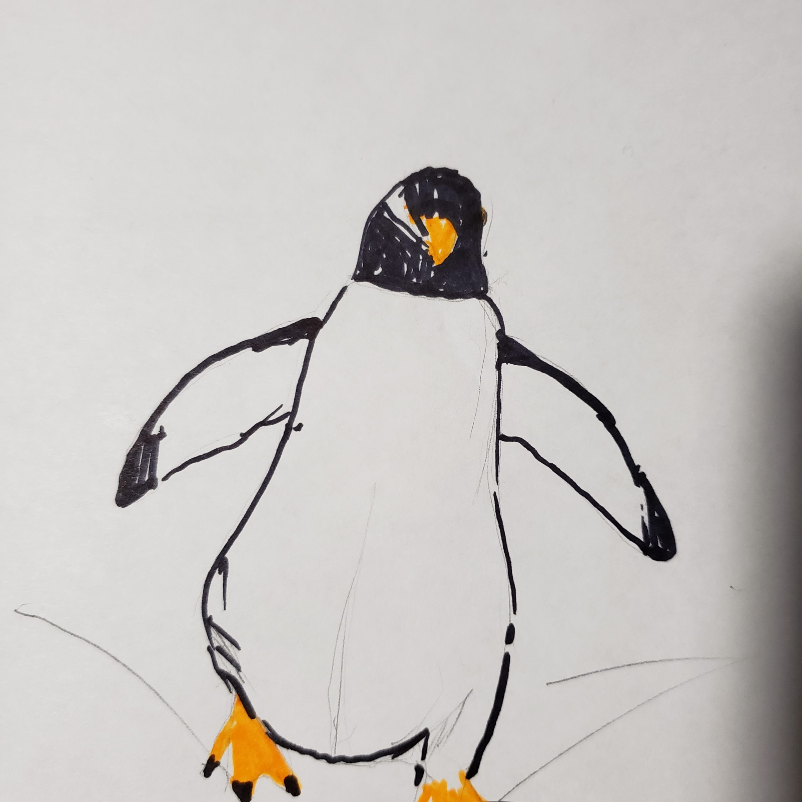 whitefish penguin