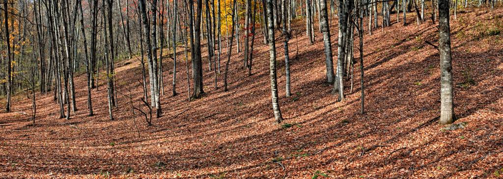 Untitled_Panorama1_1Crop