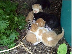 Important information about what to do if you find kittens