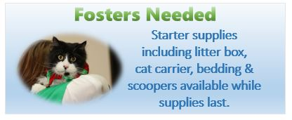 We need fosters