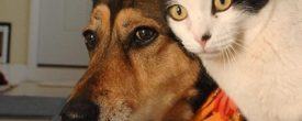 How to Introduce a Dog to a Cat | Best Friends Animal Society
