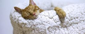 How to Adopt and Care for Your First Pet Cat