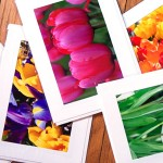 Holiday and Hearth: Spring Cards