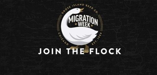 Goose_Island_Migration_Week