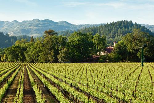 Charles_Krug_Estate_Vineyards