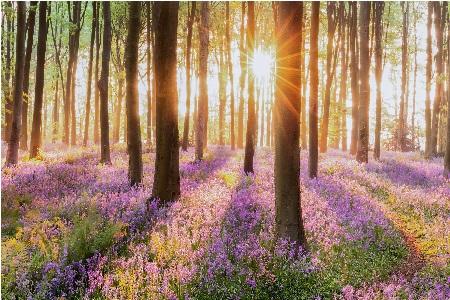 Springtime trees with sun shining through
