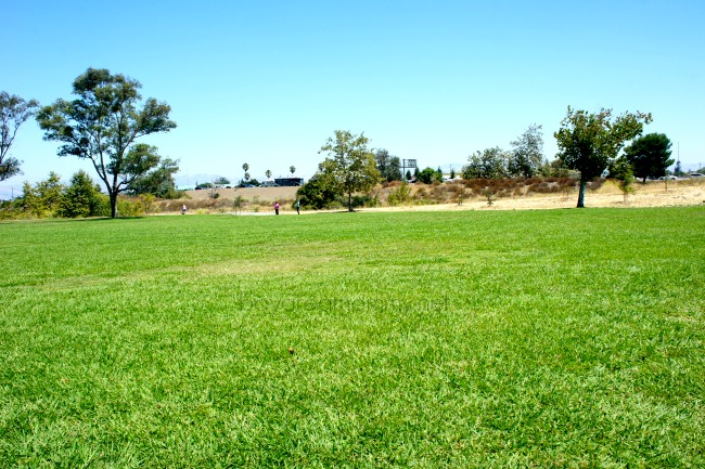 Los Gatos Creek Park