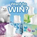 Scotties Supports Kittens + Giveaway #ScottiesKittens