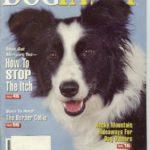 windy-dogfancy