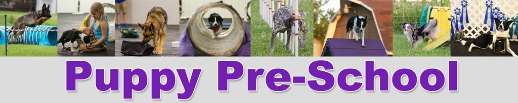 puppy-preschool