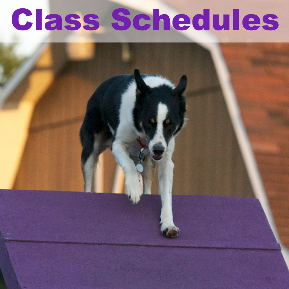 class-schedules