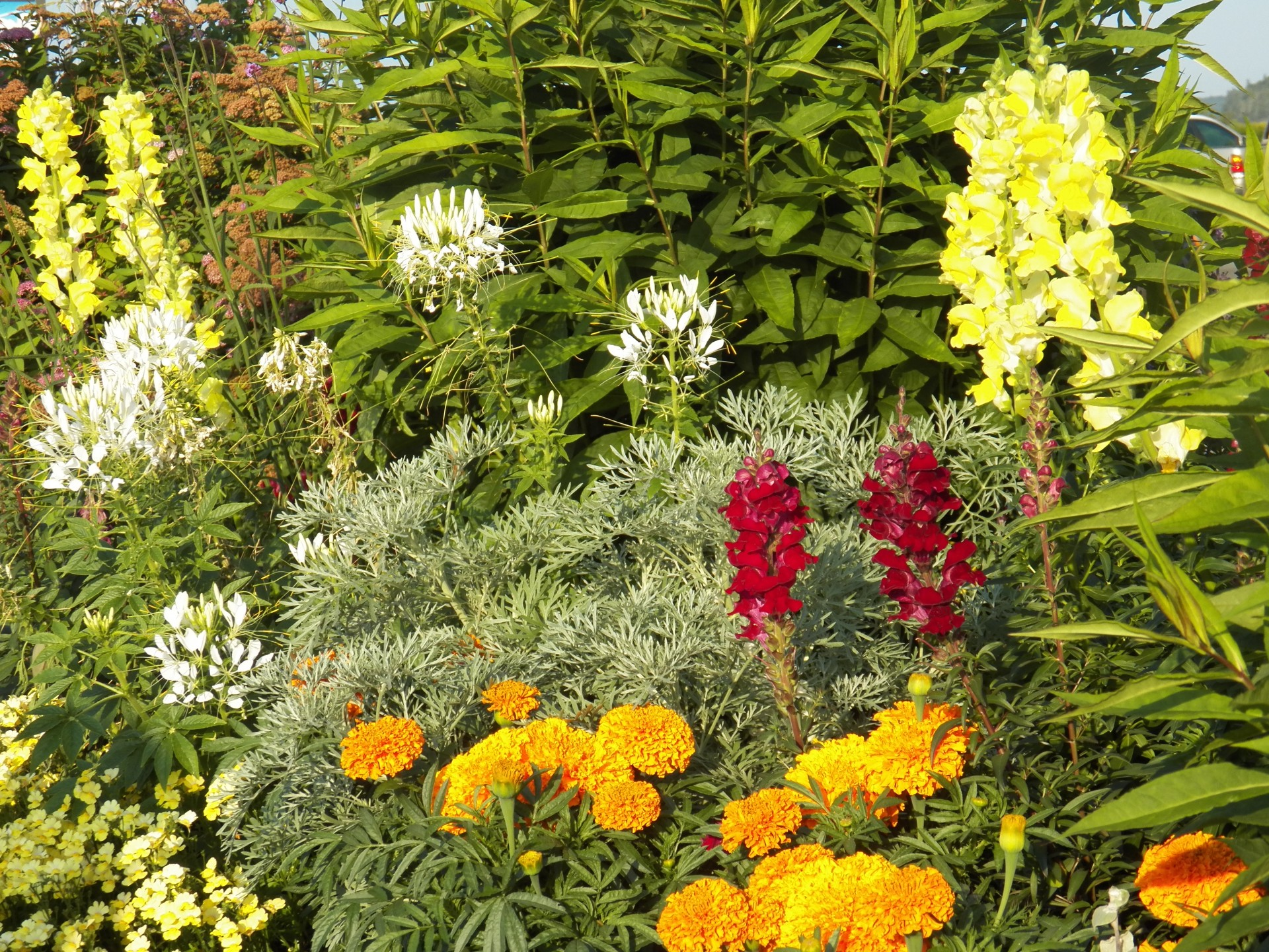 Gardening tips from Eamon in Dublin, Ireland
