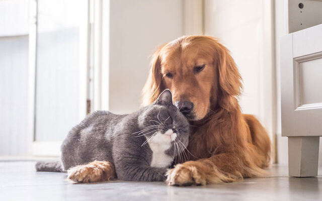 Relieve Your Pet Allergies at Home