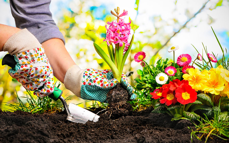 """10 """"Must-Do"""" Projects for Early Spring"""