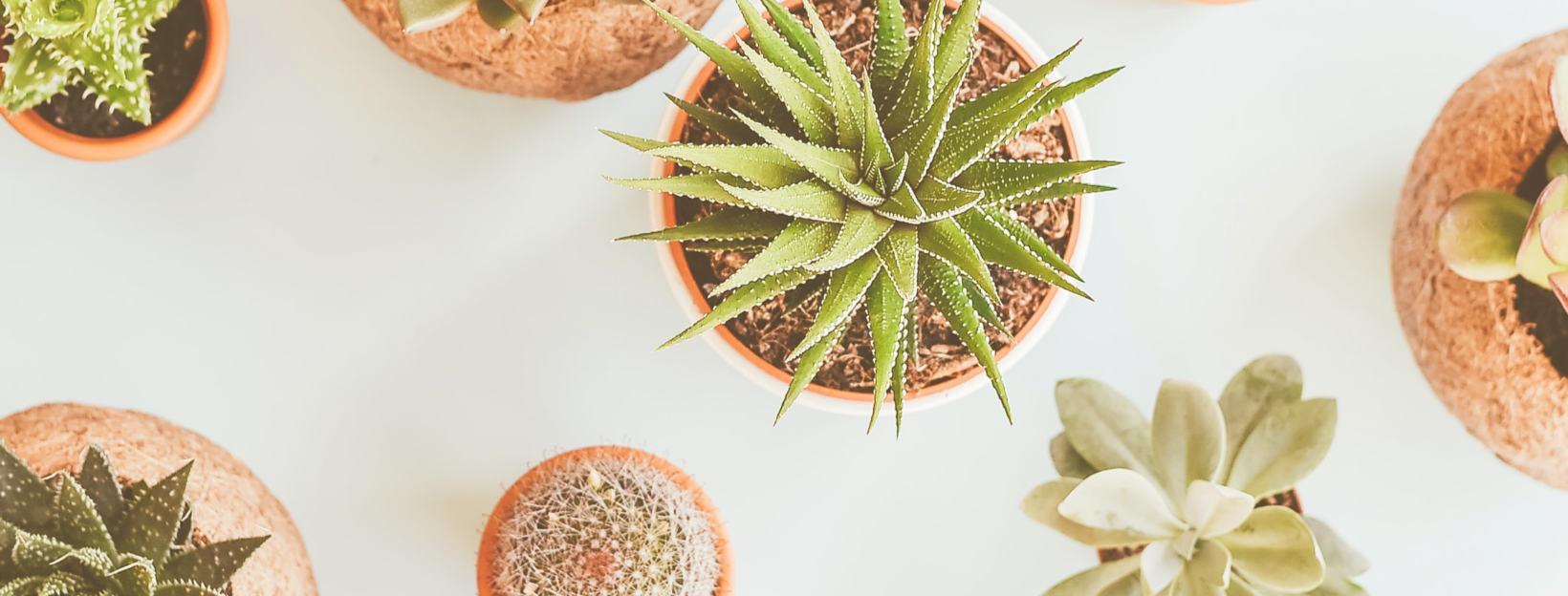 A Basic Guide For Beginner Plant Owners, From Simple Tips To Houseplant Varieties