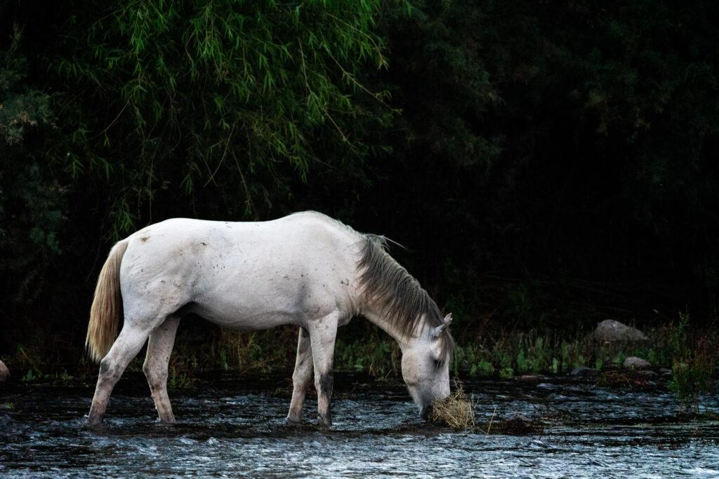 Austin-White-Horse-4338