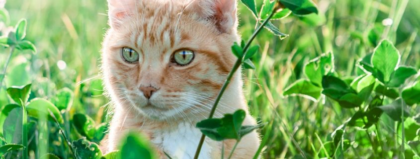 Plants that are safe for cats