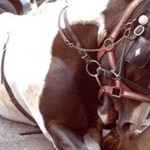 Liam Neeson Backs Horse Carriage Industry