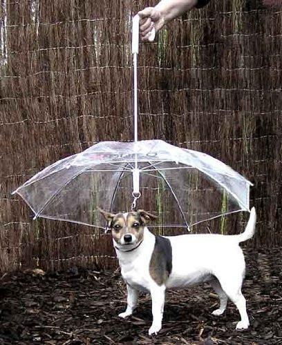 Dog Umbrella, $7 @amazon.com