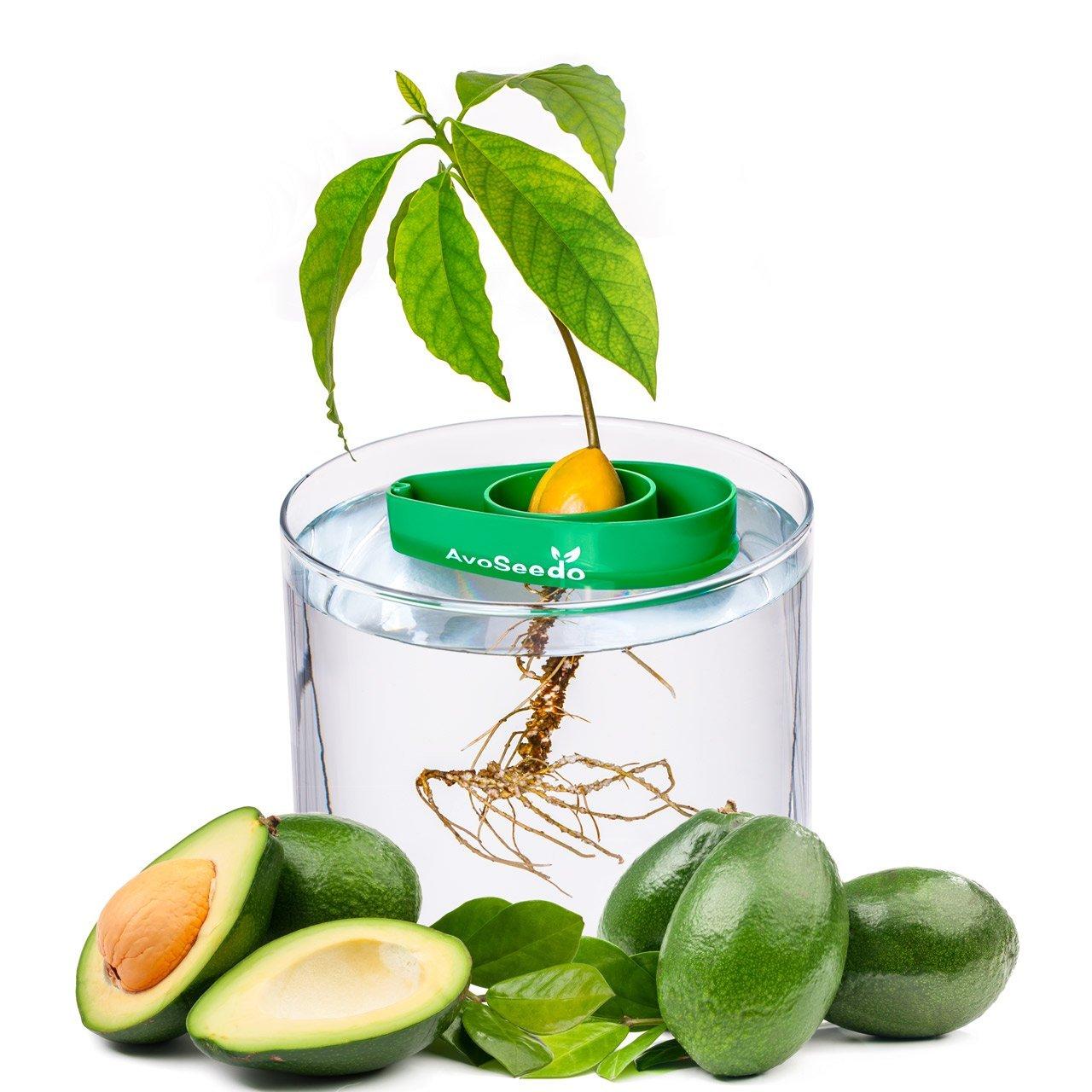 Perfect Avocado Tree Growing Kit for Every Avocado Lover, $10 @amazon.com