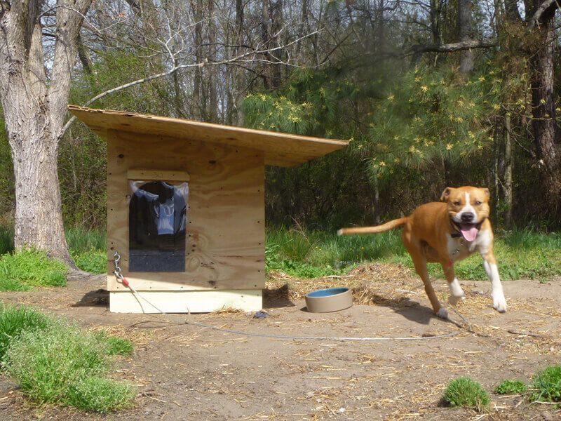 Sponsor a dog house for a poor or homeless dog, $265 @peta.org