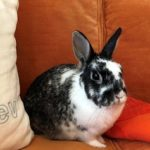 How My Pet Bunny Helped Launch A Knitwear Line