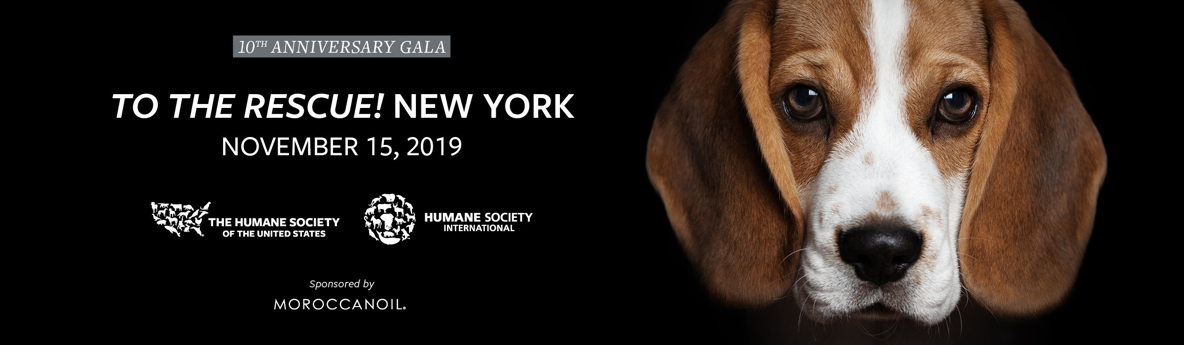 """Jerry O'Connell and Rebecca Romijn to host the Humane Society of the United States """"To the Rescue!"""" New York 10th Anniversary Gala"""