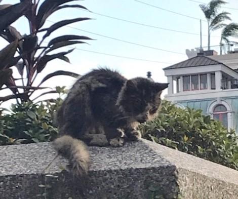 The Cat Treated Like Trash Now Treasured By Many