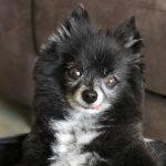 The Benefits Of Adopting Senior Pets