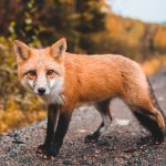 Legislation Just Introduced In Massachusetts Could End The Sale Of Fur